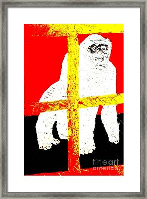 Gorilla Hogle Zoo 1 Framed Print by Richard W Linford