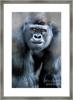 Gorilla In The Mist Large Canvas Art, Canvas Print, Large Art, Large Wall Decor, Home Decor Framed Print by David Millenheft