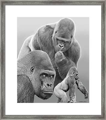 Gorilla Montage Framed Print