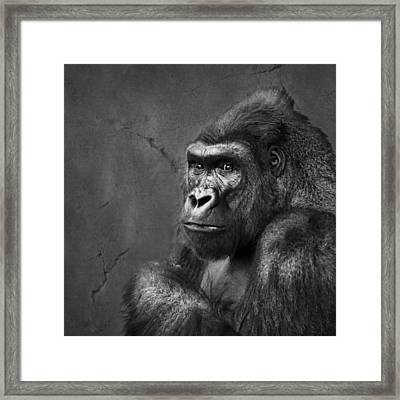 Gorilla Stare - Black And White Framed Print