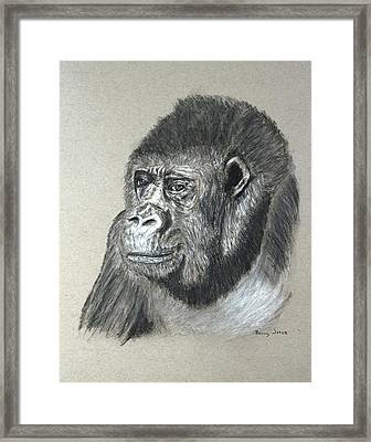 Gorilla - Wildlife Art Framed Print by Barry Jones