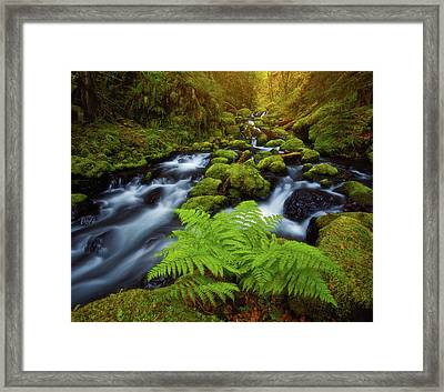 Framed Print featuring the photograph Gorton Creek Fern by Darren White