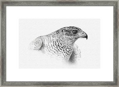 Goshawk Framed Print