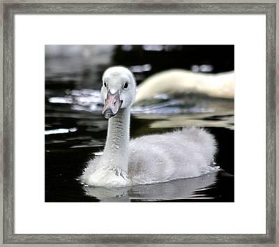 Gosling 001 Framed Print by Dawn Davis