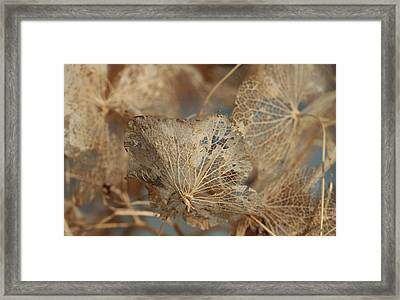 Gossamer - Lace Framed Print by Connie Handscomb