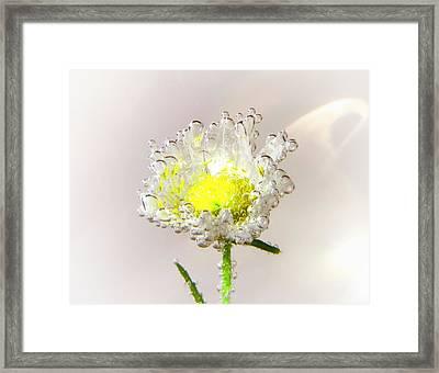 Gossamer Framed Print