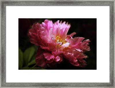 Gossamer Glow Framed Print by Jessica Jenney