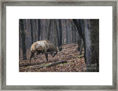Framed Print featuring the photograph Got A Scratch by Andrea Silies