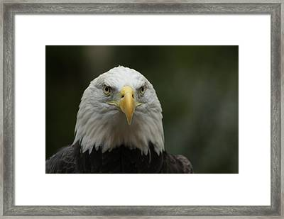 Framed Print featuring the photograph Got My Eye On You by Ron Read