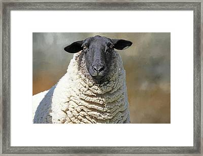 Got Shears ? Framed Print by Donna Kennedy