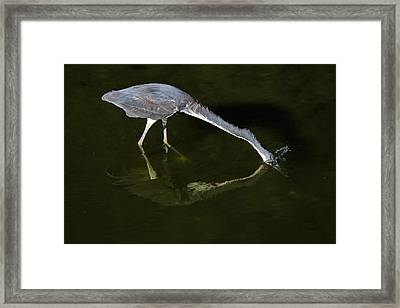 Framed Print featuring the photograph Gotcha by Donna Kennedy