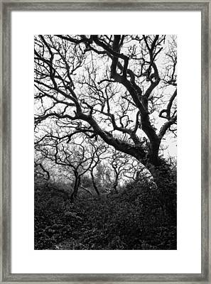 Gothic Woods II Framed Print by Marco Oliveira