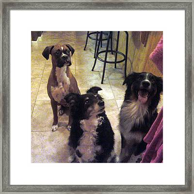 Gotta Love Dogs Framed Print