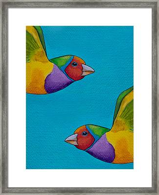 Gouldian Finches Framed Print by Robert Lacy