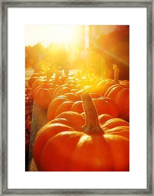 Gourds For Sale Framed Print by JAMART Photography