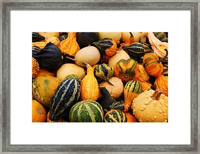 Gourds Framed Print by Jame Hayes