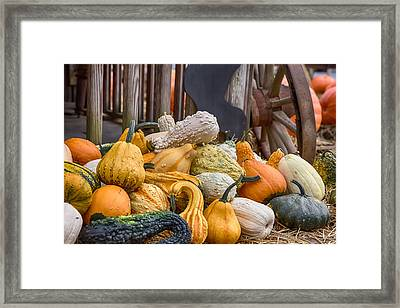 Gourds Of Many Colors Framed Print