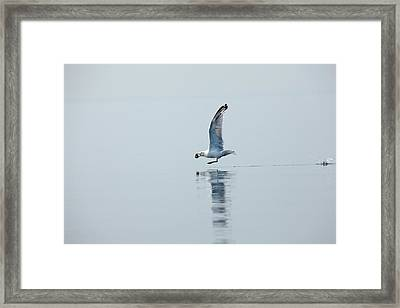 Grab And Go Framed Print by Karol Livote