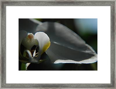Grace 2 Framed Print by Renee Holder
