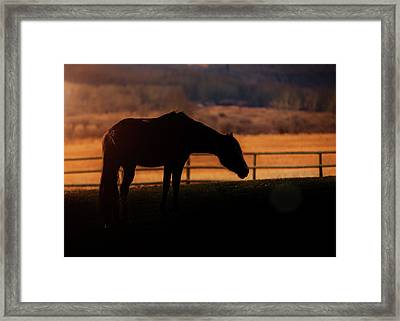 Grace, Beauty, Light Framed Print