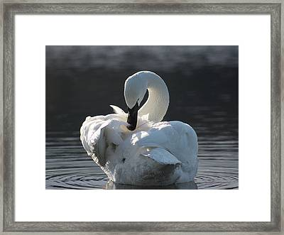 Framed Print featuring the photograph Grace by Cathie Douglas