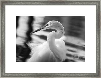 Grace Hunting Framed Print by Jack Norton