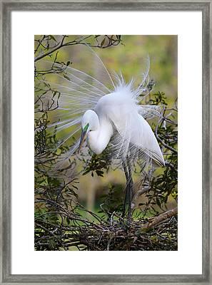 Grace In Nature Framed Print