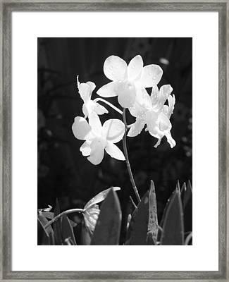 Grace Framed Print by Jim Derks