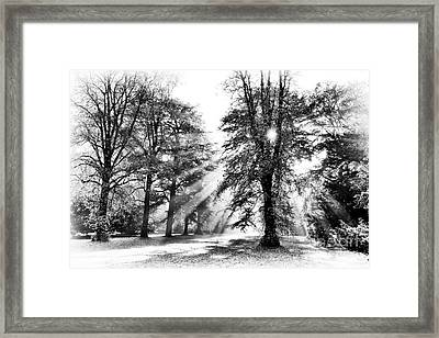 Grace Of Light And Shade Framed Print by Tim Gainey