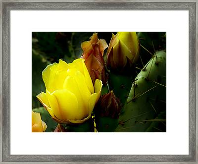 Grace Under Pressure Framed Print