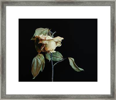 Framed Print featuring the photograph Graceful Aging by Art Shimamura