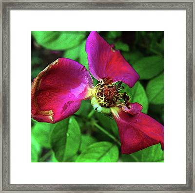 Framed Print featuring the photograph Graceful  Aging by Wanda Brandon