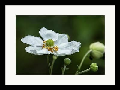 Greeb Flower Framed Prints