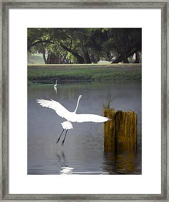 Graceful Framed Print by Cecil Fuselier