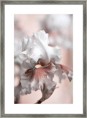 Framed Print featuring the photograph Graceful Dream by Jenny Rainbow
