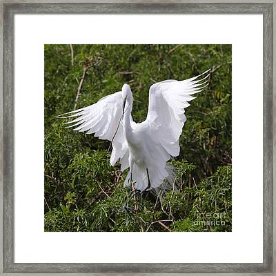 Graceful Egret Nest Builder Framed Print