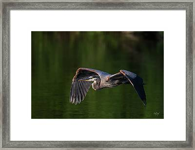 Framed Print featuring the photograph Graceful Flight by Everet Regal