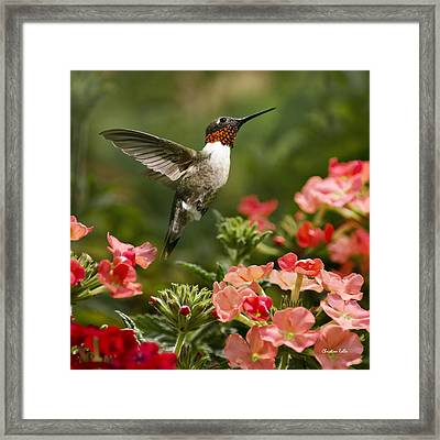 Graceful Garden Jewel Hummingbird Square Framed Print by Christina Rollo