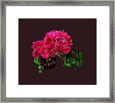 Graceful Geraniums Framed Print by Susan Savad