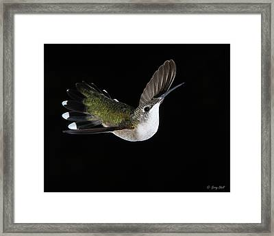 Graceful Framed Print by Gerry Sibell