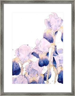 Graceful Iris Framed Print by Gail Maguire