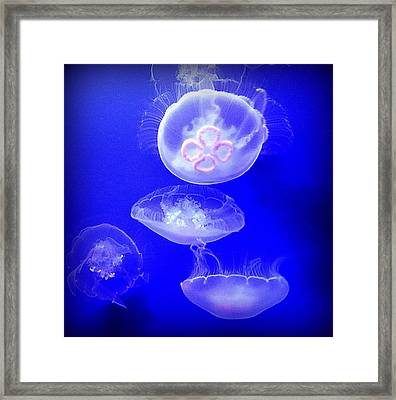 Graceful Jellies - Ballerinas Of The Sea Framed Print