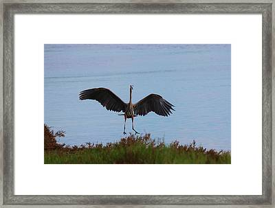 Framed Print featuring the photograph Graceful Landing  by Christy Pooschke