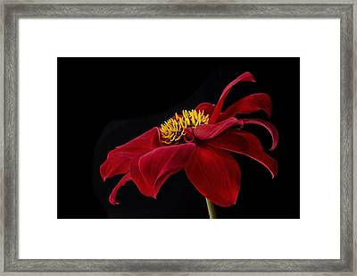 Framed Print featuring the photograph Graceful Red by Roman Kurywczak