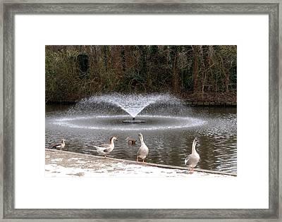 Gracefully Framed Print
