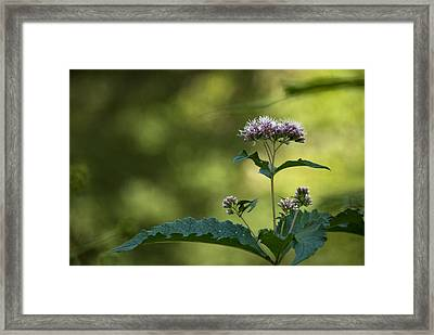 Framed Print featuring the photograph Gracefully Wild by Elsa Marie Santoro