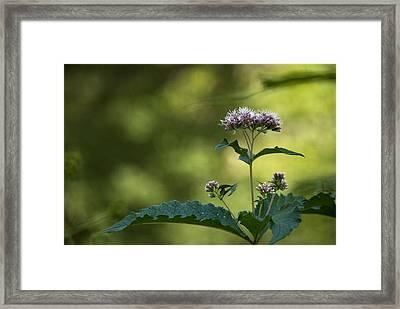 Gracefully Wild Framed Print by Elsa Marie Santoro