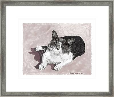 Gracie Jacks Cat Now Framed Print