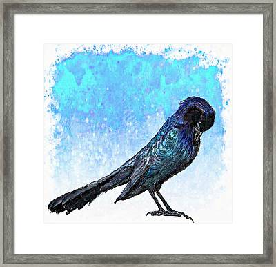 Grackle's Iridescence  Framed Print