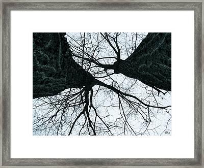 Graet Oaks Framed Print by Debra     Vatalaro